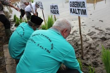 Lakukan Tanam Padi di Sungai Tuak, Gubernur Sindir Sarang Burung di Lahan Pertanian