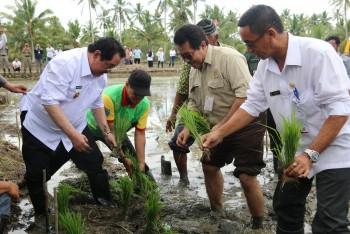 Bupati & Kadis Tanaman Pangan Hortikultura Kaltim Lakukan Tanam Padi