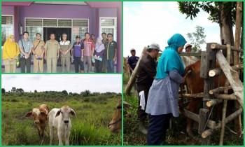 Dinas Pertanian Gelar Sapi Wajib Bunting Libatkan Ahli Peternakan dari UGM dan IPB
