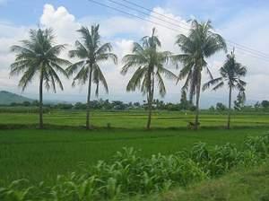 Dinas Pertanian Paser Terus Upayakan Produktivitas Petani Tidak Benar Jika ada Petani Tidak Pernah di Perhatikan